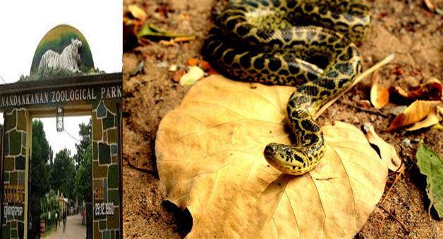 Khabar Odisha:state-odisha--8-anaconda-coming-to-nandankanan-zoo-today