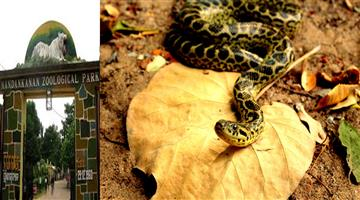 Khabar Odisha:state-odisha--8-anaconda-coming-to-nandankanan-zoo-today