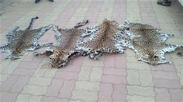Khabar Odisha:state-odisha-3-people-arrested-in-tiger-skin-traficing