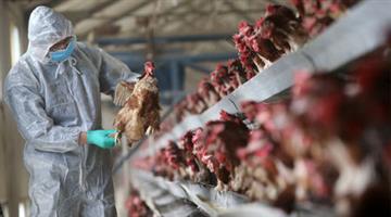 Khabar Odisha:state-odisha-Bird-Flu-in-bhubaneswar