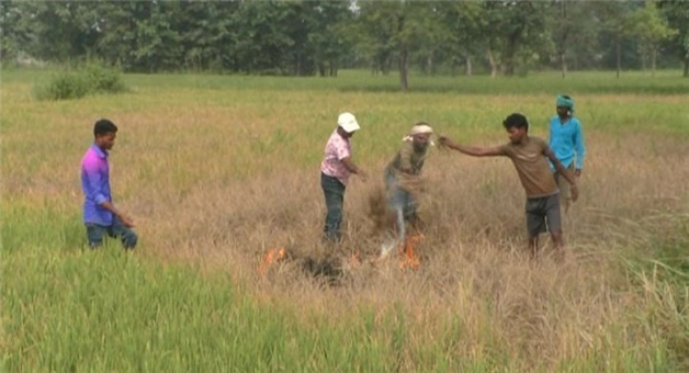 Khabar Odisha:state-odisha-Farmer-of-Chulimal-village-in-Binika-area-torches-paddy-crops-cultivated-on-his-half-acre-of-farmland