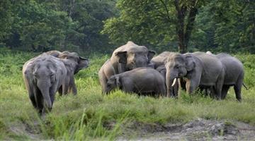 Khabar Odisha:state-odisha-berhampur-elephant-fear