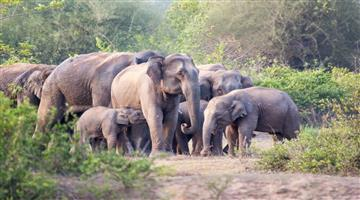 Khabar Odisha:state-odisha-elephant-in-champua-range-since-7-days-broke-down-5-houses