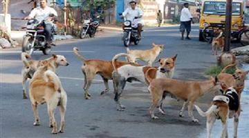 Khabar Odisha:state-odisha-mad-dog-attack-30-person-in-rourkela-daily-market