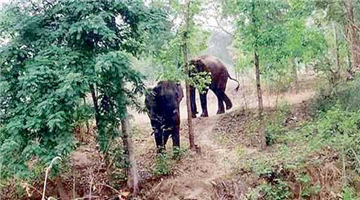Khabar Odisha:state-odisha-old-man-died-by-elephant-attack-at-dhenkanal