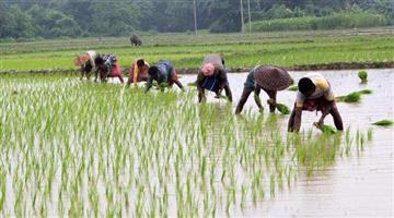 Khabar Odisha:state-odisha-rice-collect-in-odisha-from-1-november-says-food-supplies-minister